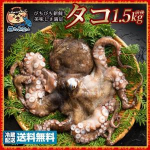 鮮魚 直送 タコ たこ (生) 1匹 約1.5kg  天然タコ 香川県産 冷蔵  [送料無料 蛸 天然 神経抜き 魚介 ] グルメ|bokunotamatebakoya