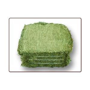 USチモシ-1番刈り牧草ダブルプレス25kg