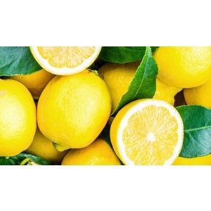 京都祇園ボロニヤはんなり 【夏季限定】レモンデニッシュ1斤 boloniya 06