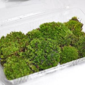 盆栽用苔(コケ) 1パック 苔(コケ) 1パック 山苔  盆栽苔 盆栽化粧用 苔盆栽 苔玉用に