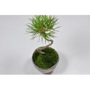 かわいい盆栽 くろまつミニミニ鉢 癒されるミニ植物|bonsaimyo|03