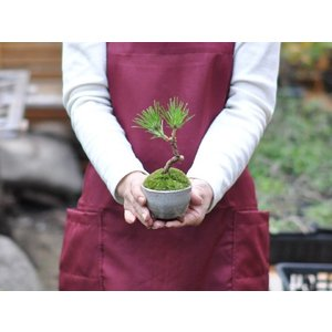 かわいい盆栽 くろまつミニミニ鉢 癒されるミニ植物|bonsaimyo|06