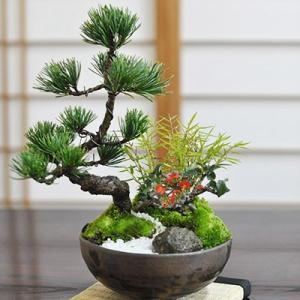盆栽 寄せ植え モダン松竹梅 5号 五葉松 長寿梅 正月飾り 迎春 新春 植物