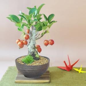 りんごの盆栽  姫りんごの盆栽 たわわな実がなるかわいい盆栽 ギフト 盆栽 開店 お祝い 退職 ラッピング 母の日 父の日 敬老の日 誕生日