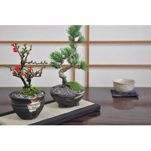 盆栽 花と松のペアセット ミニ長寿梅と五葉松の盆...の商品画像