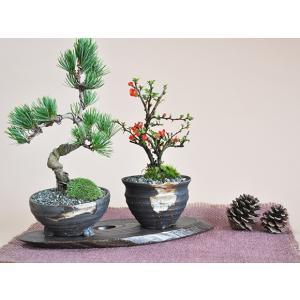 盆栽 花と松のペアセット ミニ長寿梅と五葉松の...の詳細画像1