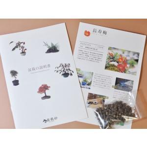盆栽 花と松のペアセット ミニ長寿梅と五葉松の...の詳細画像4