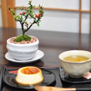 母の日 盆栽 スイーツ 盆栽 菓子セット 天然石の敷物付き ミニ盆栽 鉢植え 長寿梅 抹茶ケーキ bonsaimyo
