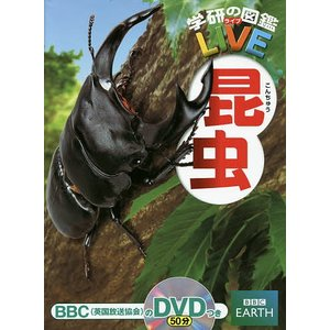 昆虫 / 岡島秀治