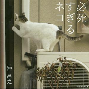 必死すぎるネコ / 沖昌之