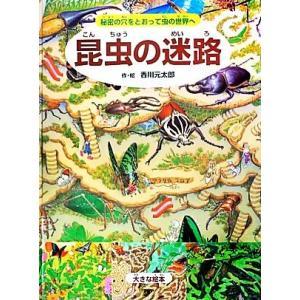 昆虫の迷路 大きな絵本 秘密の穴をとおって虫の世界へ 大きな絵本/香川元太郎【作・絵】