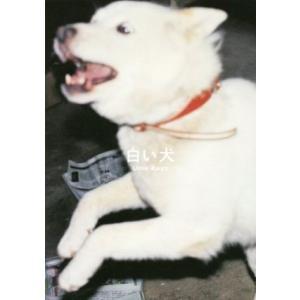 写真集 白い犬/梅佳代(著者)