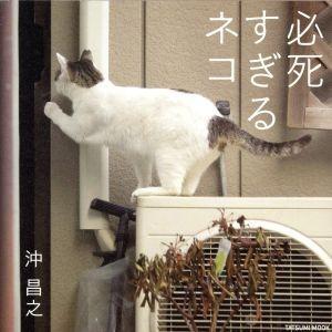 写真集 必死すぎるネコ タツミムック/沖昌之(その他)