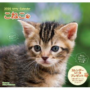 カレンダー '20 こねこ/内山晟