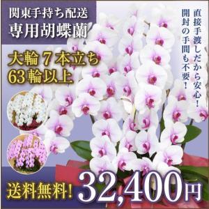【関東手持ち配送専用】胡蝶蘭 大輪7本立ち 63輪以上(つぼみ込)白