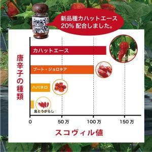 激辛 唐辛子 一味 シーハー15g(瓶詰め)|brmslife|03