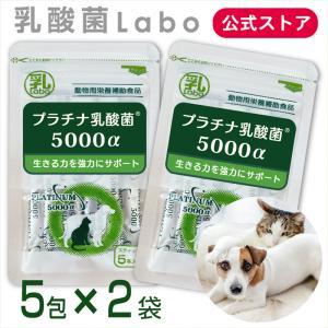 乳酸菌 ペット 犬 猫 サプリメント プラチナ乳酸菌5000α(5包入)健康 免活