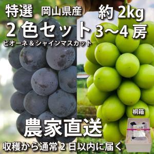 【特選】ぶどう2色セット 2kg 桐箱 ピオーネ&シャインマスカット 3~4房【2021年産予約・発...