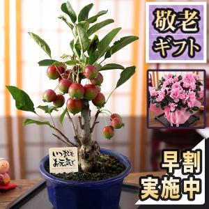 【4/1 14時まで早割10%OFF】母の日 プレゼント ギフト 花 鉢植え 5号 カーネーション ...
