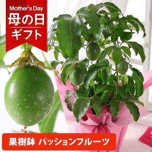 【4/1 14時まで早割10%OFF】母の日 プレゼント ギフト 花 鉢植え シャクナゲ バラ 薔薇...