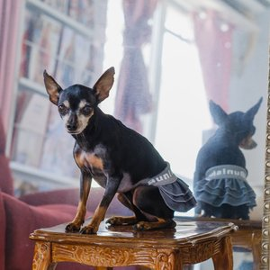 【グレー色】デニムスカート 小型犬用 bunbunshop 08