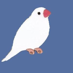 【トーシンパック】pi: ピンズ(白文鳥)|bunchoya