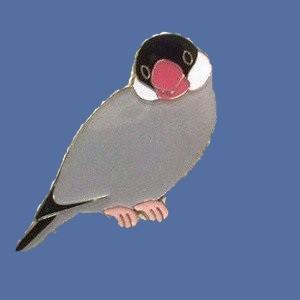 【トーシンパック】pi: ピンズ(桜文鳥)|bunchoya