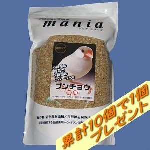 【黒瀬】maniaブンチョウ(殻付き) 3L|bunchoya