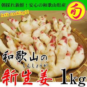 新生姜の出荷量、日本で第二位の和歌山の砂地から採れたてをお届け致します。