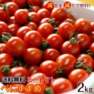 ミニトマトキャロルセブン2kg (送料無料) 減農薬、減化学肥料で育てたこだわりハウス栽培の美味しさ! (fy5)|bundara