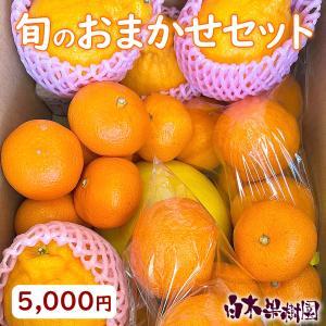 白木果樹園春の柑橘おまかせセット【Cセット】フルーツ詰め合わ...