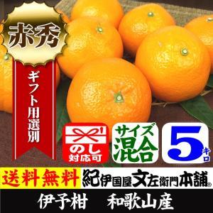 伊予柑 いよかん 秀品5kg 紀州有田産 サイズ混合|bunza