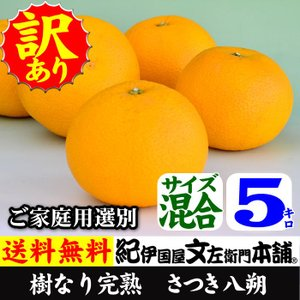 さつき八朔・樹なり完熟はっさく 5kg 訳あり品(ご家庭用選...
