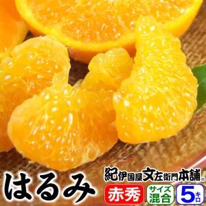 春みかん はるみ 5kg 秀品選別 サイズ混合果実 和歌山県有田産 完熟かんきつ|bunza