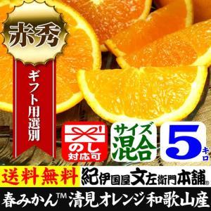 清見オレンジ5kg(ギフト選別品)紀州和歌山有田みかんの里から最高級選別|bunza