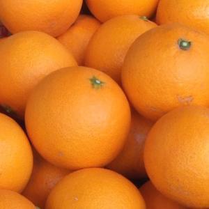 訳あり清見オレンジ5kg・紀州和歌山有田みかんの里から (規格外 不揃い)|bunza|03