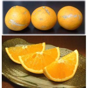 訳あり清見オレンジ5kg・紀州和歌山有田みかんの里から (規格外 不揃い)|bunza|04