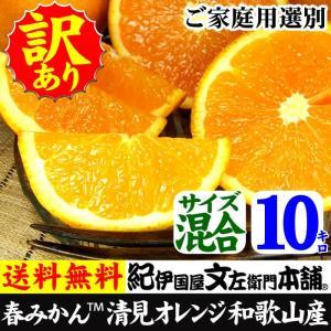 わけあり 訳あり清見オレンジ10kg 紀州和歌山有田みかんの里から TVで話題の(規格外 不揃い)果実 割引セール|bunza