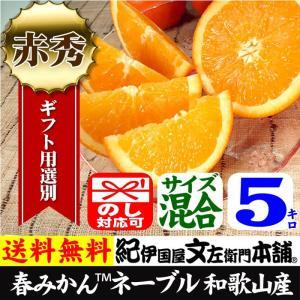 ネーブルオレンジ(紀州有田産)約5kg/正品/サイズ選別無し 常温便|bunza