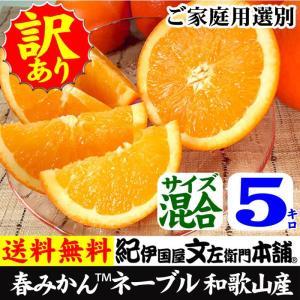 ネーブルオレンジ(紀州有田産)約5kg/ご家庭用ワケアリ果実 サイズ選別なし|bunza