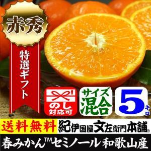 セミノールオレンジ 特選ギフト品 5kg 紀州有田産 常温便  和歌山県・有田みかん|bunza