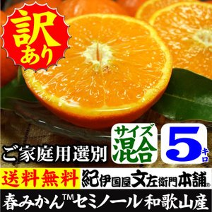 セミノール オレンジ(買得品5kg)紀州有田産 (規格外 不揃い)わけあり 訳あり柑橘(皮に傷)・ご家庭用 常温便  和歌山県・有田みかん|bunza