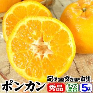 紀州有田産 椪柑/ポンカン5kg(正品)サイズ混合 常温便|bunza