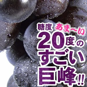 巨峰村・朝穫り(即日発送)紀州和歌山金屋産 巨峰ぶどう 1kg(ハウス栽培)|bunza