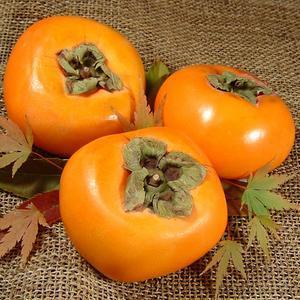 紀州和歌山 種なし柿 約7.5kg L 36個入 青秀  ながみね お買得 (訳あり わけあり 不ぞろい)/平核無柿(ひらたねなし柿)種無し柿|bunza
