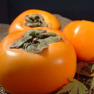 和歌山の種なし柿・西浦さんちのたねなし柿 約7.5kg 28〜36個入  特選ギフト(赤秀)・種無し柿|bunza