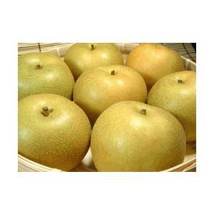 和歌山の梨 長寿品種 2kg(6玉) |bunza