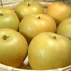 和歌山の梨 幸水品種 4kg(9玉) |bunza