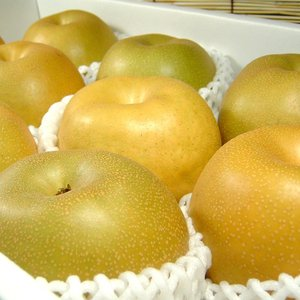 和歌山の梨 幸水品種 4kg(10〜11玉) |bunza