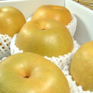 和歌山の梨 豊水品種 2kg(5玉) |bunza